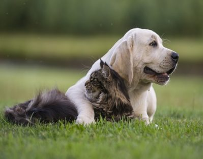 Why Should Seniors Own a Pet in Edmonton, AB